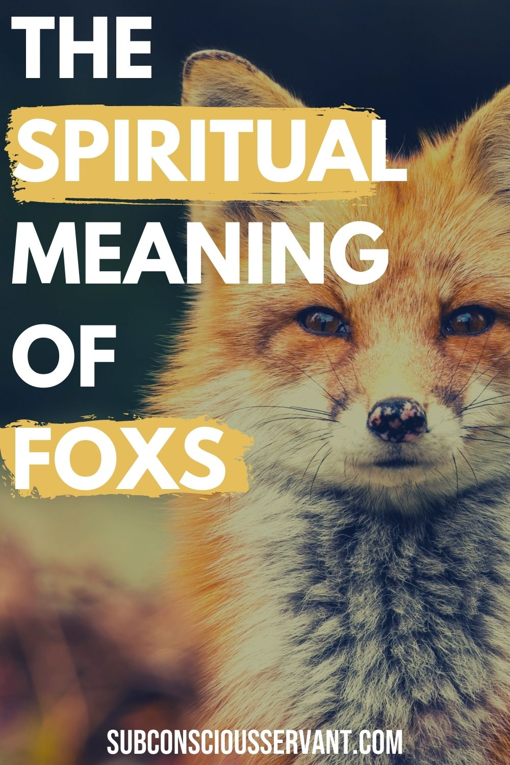 Fox Spiritual Meaning - The Amazing Symbolism Of Seeing A Fox