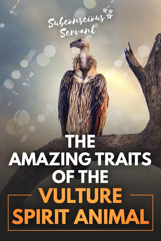 Amazing Secrets Of The Vulture Spirit Animal Revealed - Symbolic Meanings