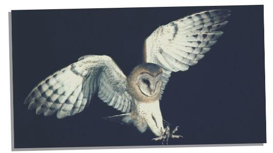 air spirit animals