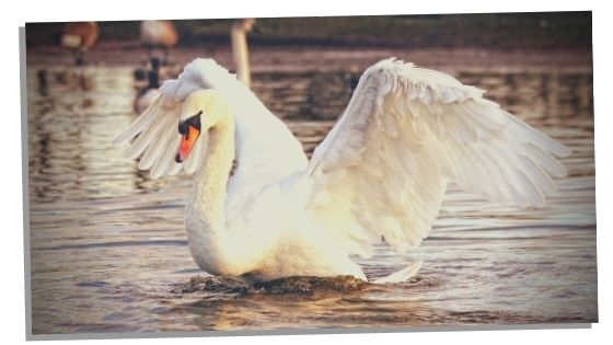 negative characteristics of swan spirit animal