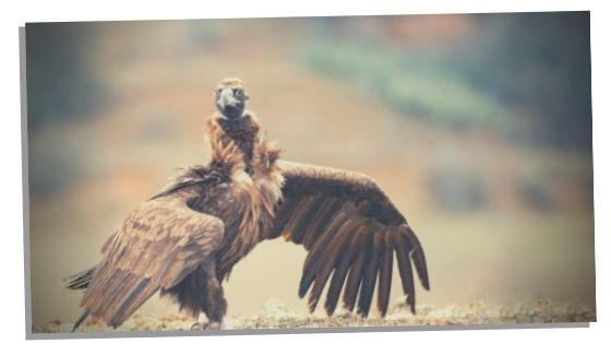 meaning of vulture mythology