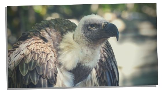 vulture spirit animal signs