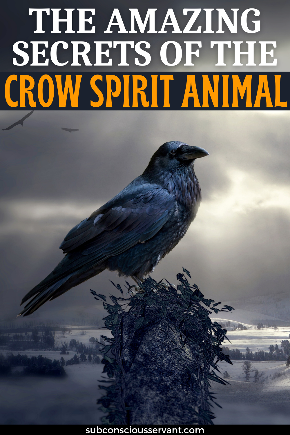 The Amazing Black Crow Spiritual Meanings - Totem, Symbolism And More