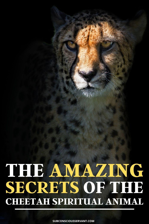 The Amazing Cheetah Spiritual Animal – Totem, Symbolism And More