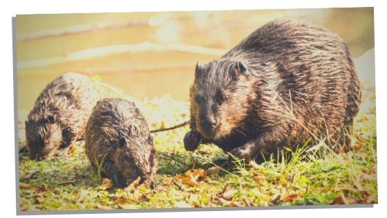 Beaver work life balance