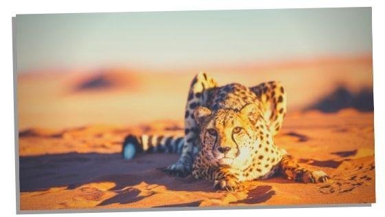 cheetah traits and characteristics