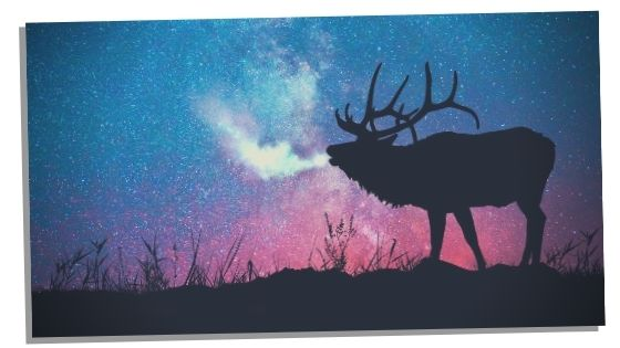 dreaming of elks