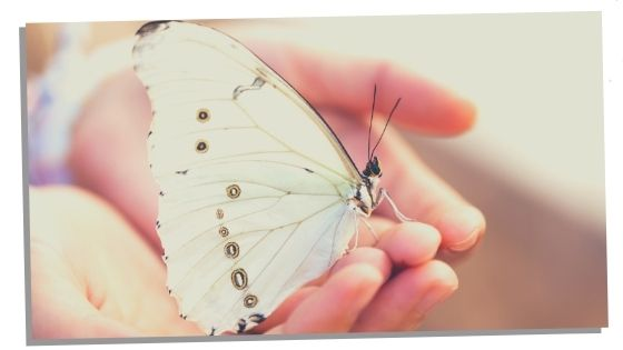 Butterfly Landing On You