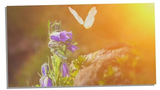 Butterfly Spirit Animal Symbolic Meanings