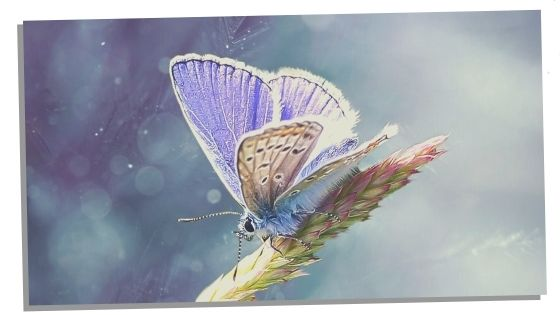 Butterfly Totems