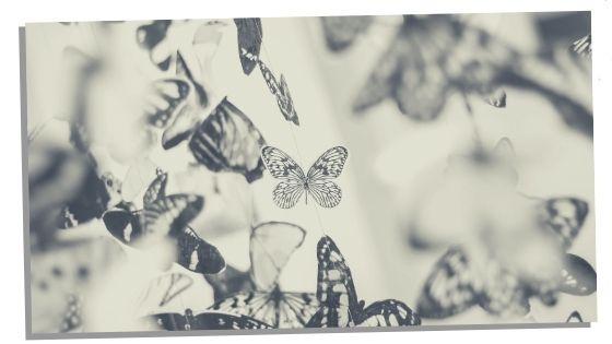 Butterfly Spirit Animal Negative Traits