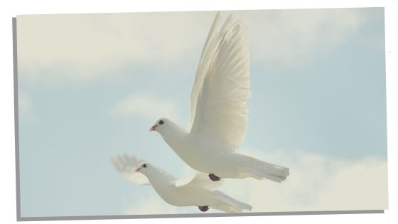 Potential Significance Of Two Doves