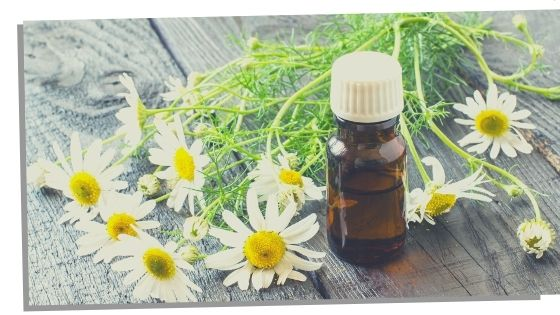 Chamomile Essential Oils For The Throat Chakra