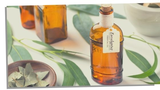 Eucalyptus Essential Oils For The Throat Chakra