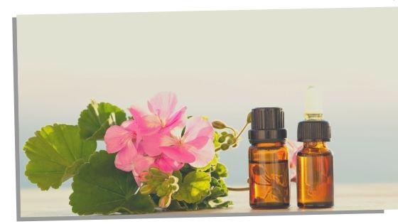 Geranium Essential Oils For The Throat Chakra
