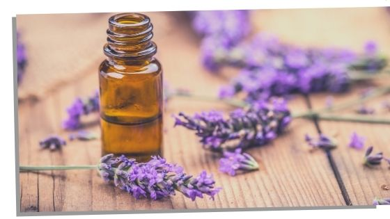 Lavender Essential Oils For The Throat Chakra