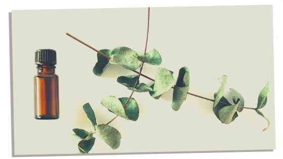 Eucalyptus essential oil for the heart chakra