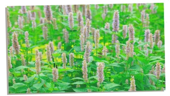 Patchouli essential oil for grounding.