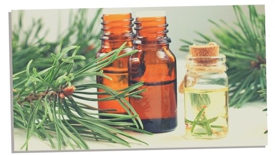 Pine essential oil for the heart chakra