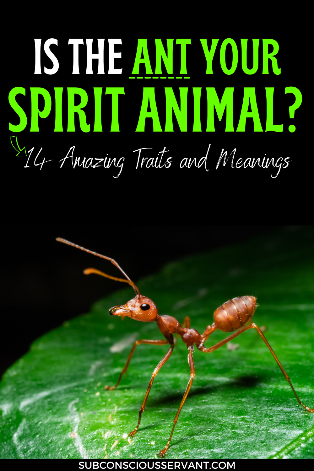 Is The Ant Your Spirit Animal? 14 Amazing Traits and Meanings