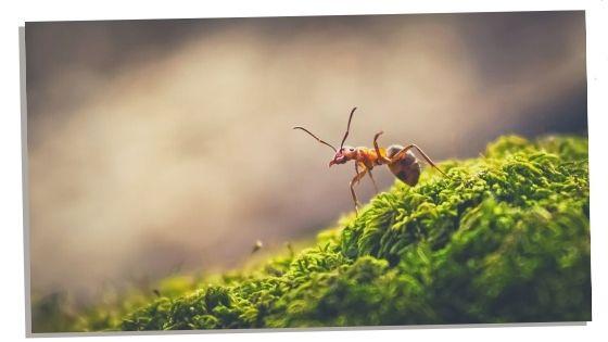 Ant spirit animal traits