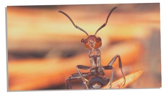 Ant negative traits