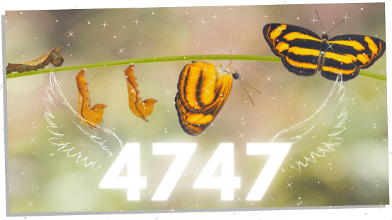 Butterfly and 4747